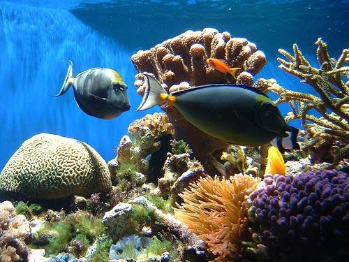 http://interferente.ro/images/stories/descopera/geografie/corali/2/marea%20bariera%20de%20corali3.jpg