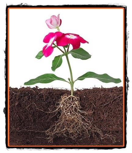 Partile Componente  Plante Flori