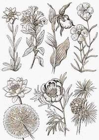 Specii De Flori Rare Ocrotite De Lege In Romania