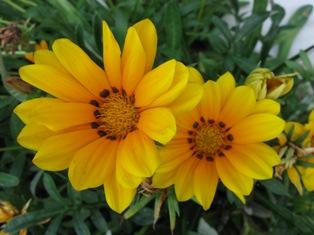 Nume de flori cu litera e