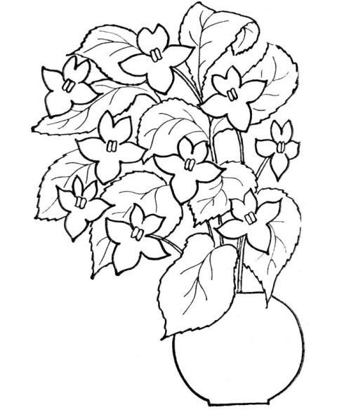Viorele, violete, toporasi - planse de colorat Pentru o gradina de ...