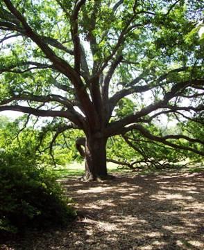 De ce nu pot umbla arborii